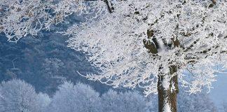 soñar con paisaje-nevado