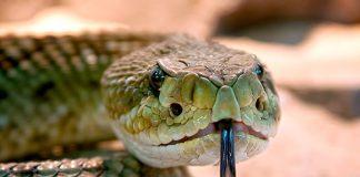 significado-de-soñar-con-una-serpiente