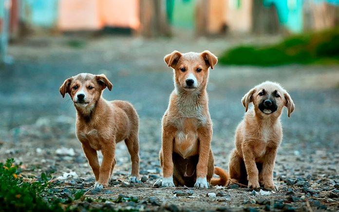 tres-perros-en-la-calle