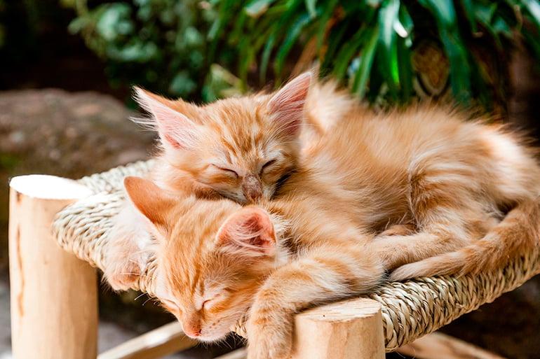 varios-gatos-durmiendo